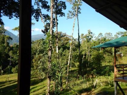 Selva Bananito