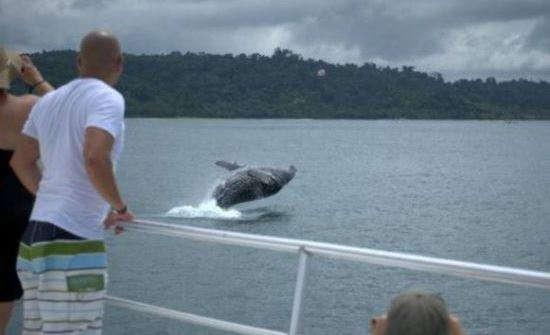 My Manuel Antonio Whale Watching Adventure