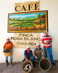 Finca Rosa Blanca Coffee Plantation Review