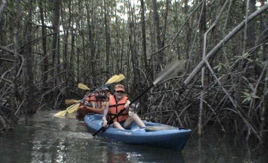 Top Costa Rica Jungle Tours & Mangrove Excursions