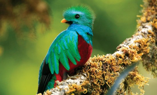 Top Ten Birding Destinations in Costa Rica