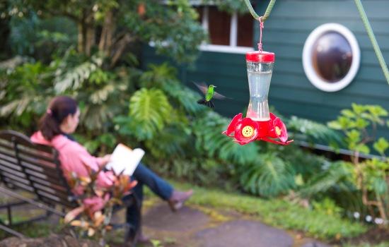 Monteverde Cloud Forest hummingbird garden