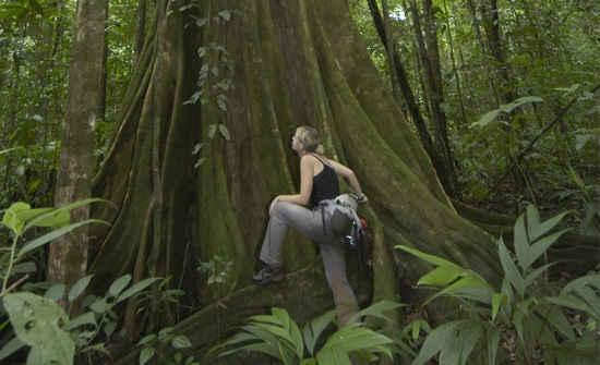 Osa Peninsula Rainforest Travel Guide