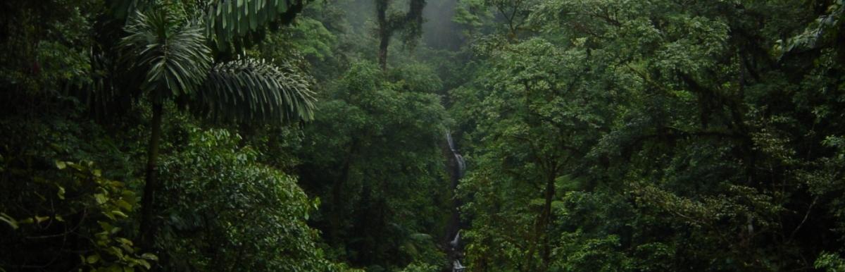 Best Costa Rica Jungle Mangrove Tours