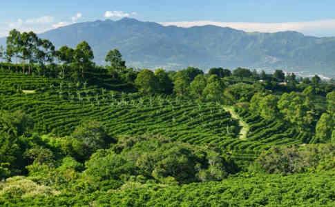 San Jose Costa Rica Travel Guide