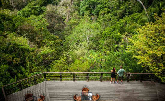 DISCOVER THE MYSTERIES OF THE COSTA RICA RAINFOREST