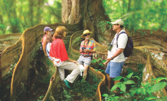 Best Cloud Forest Day Tours