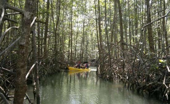 Manuel-Antonio-Damas-Island-Estauary-Kayaking