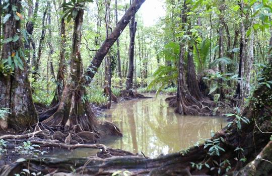 Osa Peninsula Tours mangroves
