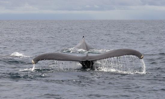 Osa Peninsula Tours whales