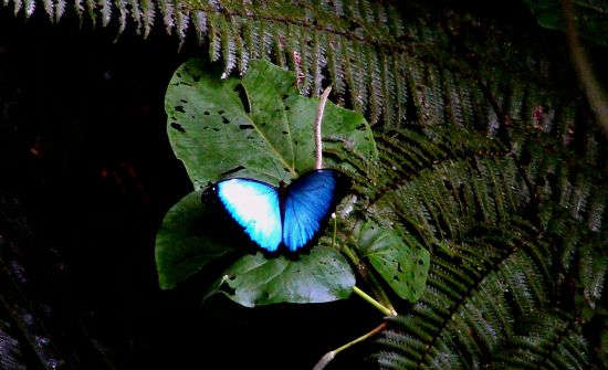 Top 6 Monteverde Tours & Activities