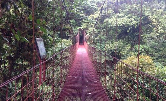 Top Monteverde Day Tours & Activities