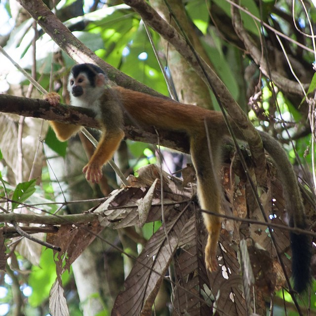 #monkeys everywhere in #costarica - wish I could spend my afternoon this way! #nature #vacations ??