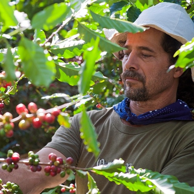 Happy National Coffee Day to all you Java lovers out there! One way to celebrate? Head to Finca Rosa Blanca Coffee Plantation & pick those delicious cherries yourself! ☕️☕️