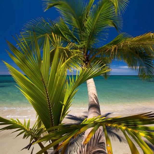 Ohhhh #paradise ???#costarica #vacations