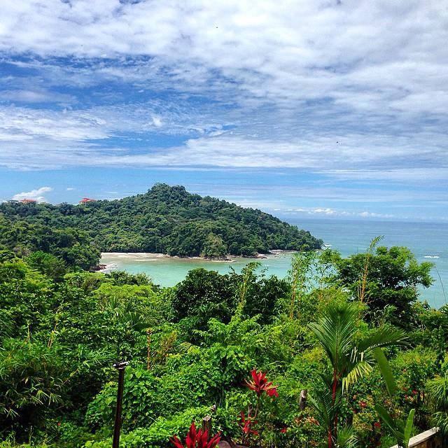Beautiful #rainforest foliage in Manuel Antonio #costarica #vacations ??
