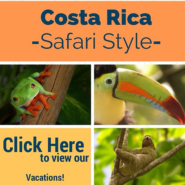 Looking to go on a #safari? Costa Rica had the #wildlife ? We currently have a promo for our email subscribers! Make sure to join for special deals!