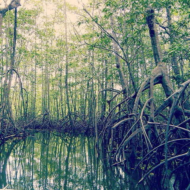 A boat ride through #creepy mangroves ? Happy Halloween!! ??
