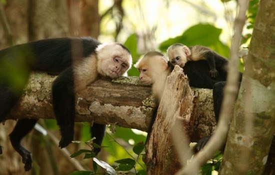 Big Five Animals in Costa Rica