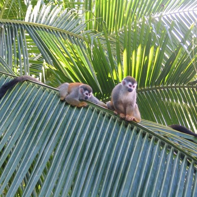 #TGIF! Feeling playful ?? A @PureTrek photo #CostaRica #nature
