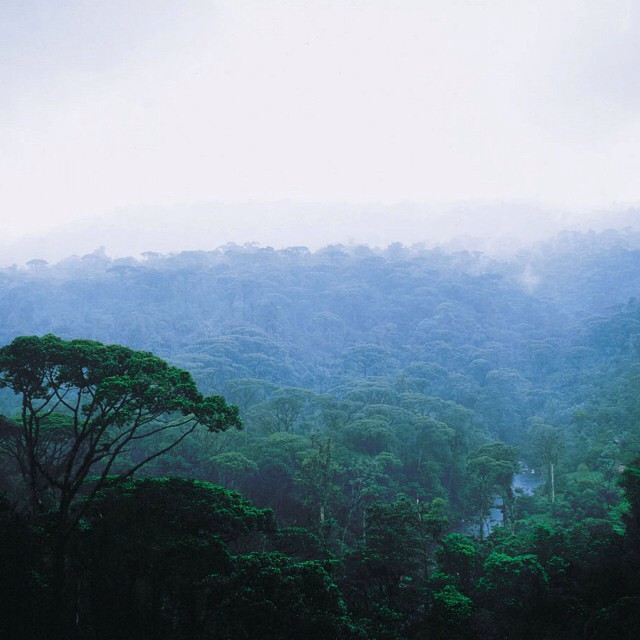 The #rainforest canopy blending into the #clouds.. ☁️ #CostaRica #CloudForest