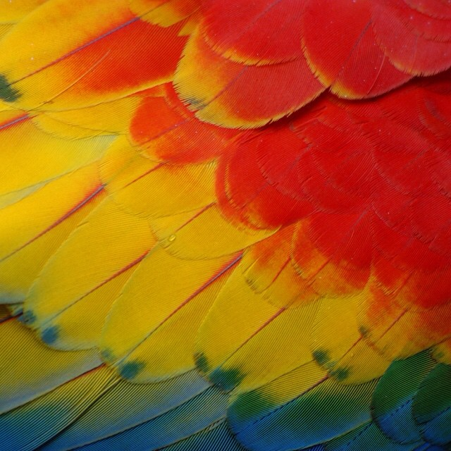 Colors of #nature - a scarlet #macaw close-up! ?? #CostaRica #vacations