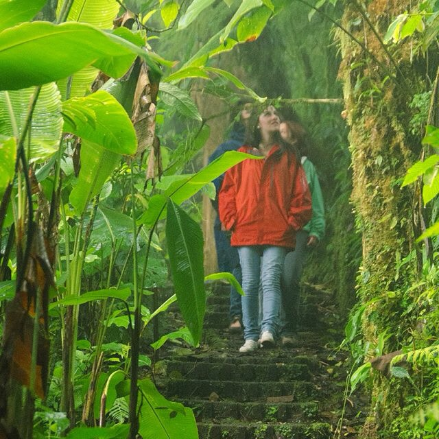 Visit the Monteverde Cloud Forest Reserve on the continental divide for a dose of #greens!?? #costarica #nature A tourist board photo!