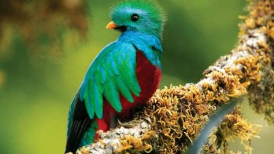 Bird Watching in Costa Rica Vacation