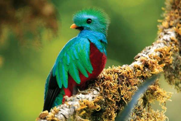 Image result for birds costa rica