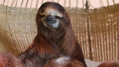 Sloth Sanctuary Costa Rica Buttercup