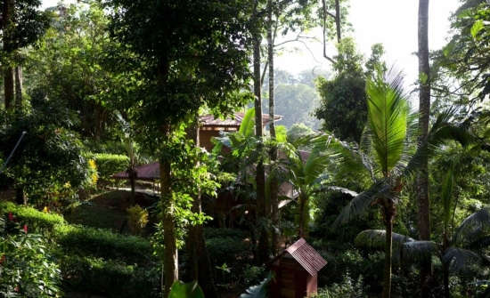 Samasati casitas blend with the rainforest