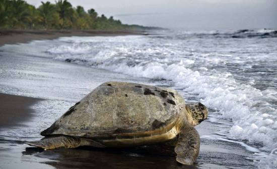 7 Best Places to See Wildlife in Costa Rica