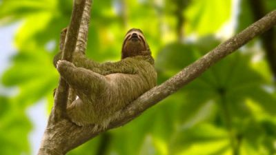 Sloths and Treehouses vacation package
