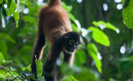 El Remanso Rainforest Lodge wildlife