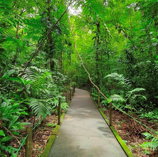 Carara National Park trail