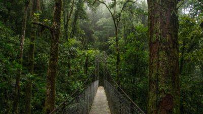 Arenal Hanging Bridges Hike Tour