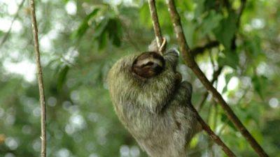 Slothies & Birds Nature Tour