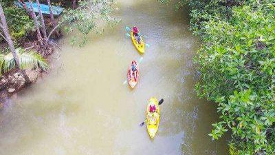 Damas Island Mangrove by Kayak