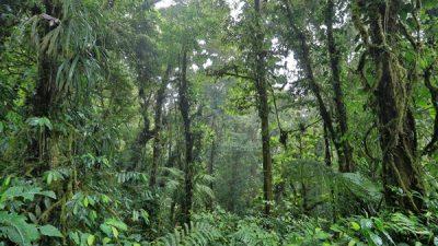 Monteverde Cloud Forest Reserve Hike
