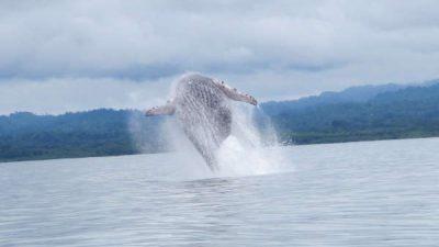 Whale & Dolphin Combo Tour Marino Ballena