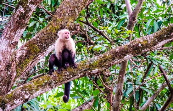 Capuchine monkey via @jforonda_photo in Santa Rosa National Park